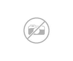 Grigio, Chinchilla, Standard For Adoption In Santa Rosa, California - 1/4